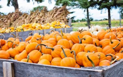 Five Fall Festivities for Your Family